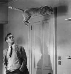 George Peppard and Cat - Breakfast At Tiffany's.  this makes me so happy that my heart hurts...