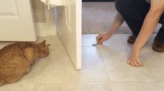 How To Freak-out & Exercise Your Cat!