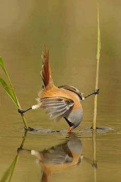 Amazing picture of a bird acrobat!