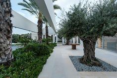 Casa em Shfela,Cortesia de Dan and Hila Israelevitz Architects