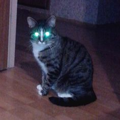 #cat #cats #markus #markuscat #lol