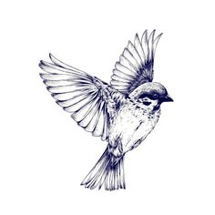 "-this would be a pretty tattoo ""are not two sparrows sold for a penny? Yet none of them will fall to the ground outside your Father's care""  Matt. 10:29"