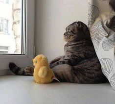 30brilliant photos that all cats can beproud of
