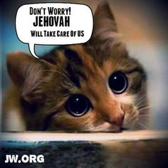 Yes I have 4 Cats that Jehovah see's get Well Fed too. Jehovah's Witnesses Humor, Jehovah S Witnesses, Jehovah Witness, Jw Memes, Isaiah 42, Jw Humor, Spiritual Encouragement, Spiritual Thoughts, Bible Truth