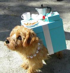 Breakfast at Tiffanys'.  Hilarious and so cute.  I can't help it, I love dogs in Halloween costumes!