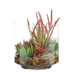 Natural Decorations, Inc. - Succulent  Burgundy Green | Glass Cylinder via ndi.com