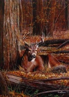 Kevin Daniel - Bedding Down - A whitetail deer buck finds a perfect spot, deep in the woods, to rest for the night. Whitetail Deer Pictures, Deer Photos, Deer Pics, Hunting Art, Deer Hunting, Hunting Stuff, Turkey Hunting, Wildlife Paintings, Wildlife Art