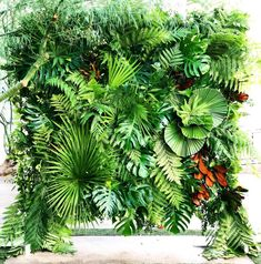 Katrina and Matthew asked us to create a tropical foliage wall as the backdrop for their wedding ceremony. This was so much fun. Floral Backdrop, Diy Backdrop, Wall Backdrops, Ceremony Backdrop, Backdrop Wedding, Tropical Party, Tropical Garden, Tropical Flowers, Wedding Wall