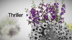 Proven Winners® Gardener Channel: How-To Create The Perfect Container Ga...