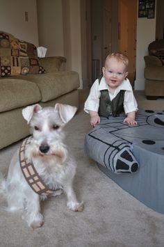 Look What We Made: The Millennium Falcon - The Karpiuks Look at the cute schnauzer Chewie!