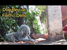 Dog Rescued From Street, Amazing Transformation!