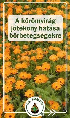 Live, Health, Plants, Health Care, Plant, Planets, Salud