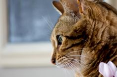 lonely cat by Gabriel Harnois on Gabriel, Lonely, Cats, Animals, Archangel Gabriel, Gatos, Animales, Kitty Cats, Animaux