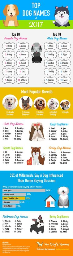 131 Best Dog Names images in 2017 | Dog names, Dogs, Puppy names