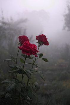 86458a0a24407ebd88eb565deb20c491--romantic-flowers-rose-flowers.jpg (427×640)