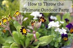 How to throw the ultimate outdoor party !! Entertaining tips and ideas