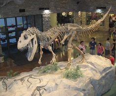 """Verwandte der """"wilden Echsen"""" jagten auch in Europa - Kieferfragmente aus Portugal lassen auf den Torvosaurus schließen, den großen Landjäger aus dem Jura. Der Torvosaurus wurde bis zu zehn Meter lang und wog bis zu fünf Tonnen. Mehr dazu hier: http://www.nachrichten.at/nachrichten/weltspiegel/Verwandte-der-wilden-Echsen-jagten-auch-in-Europa;art17,1323425 (Bild: OÖN)"""