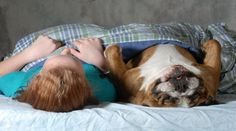 Sharing A Bed With Man's Best Friend Is Costing You Sleep; 63% Of ...