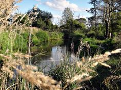 rzeka, przyroda