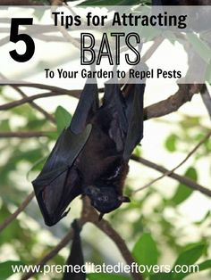5 Tips for Attracting Bats to Your Garden- Bats can be beneficial in your garden because they feast on pesky insects. Here are 5 easy ways to attract them.