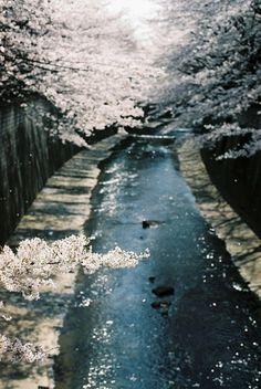 kukkapuut