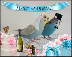 http://cooperscorner.info/wp-content/uploads/2014/01/justmarried.jpg
