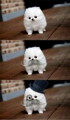 I don't really like these dogs, but if they would always wear that I would own one.