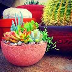 Beautiful unique rustic succulent l Endless Succulent Ideas Succulents In Containers, Cacti And Succulents, Cactus, Concrete Planters, Planter Pots, Succulent Arrangements, Succulent Ideas, Dish Garden, Farm Gardens