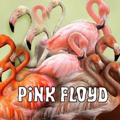 Floyd Pink !