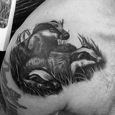 Pics Photos - Honey Badger Tattoo Picture