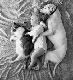 They are SO adorable! What is your life motto? Photos With Dog, Baby Photos, Cool Photos, Fall Family Photo Outfits, Fall Family Photos, Funny Kids, Funny Cute, Baby Photo App, Diy Pet