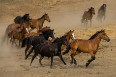 wild horses-  hopefully they will continue to run free!  for info please see www.returntofreedom.org