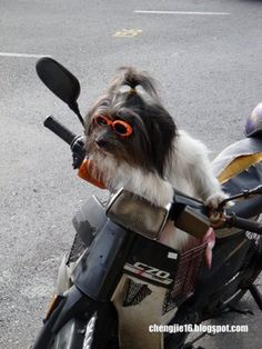 Google Image Result for http://www.automopedia.org/wp-content/uploads/2009/05/dog-1.jpg