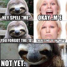 creepy sloth lol that face!