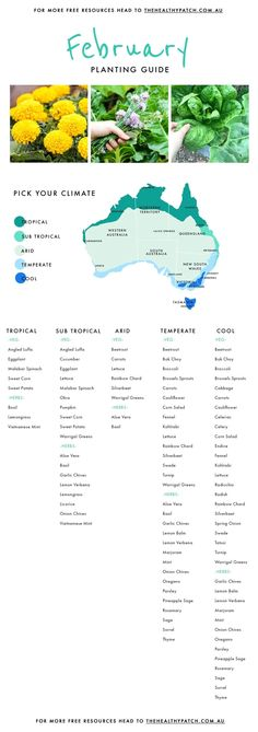 February Edible Planting Guide Australia Wide The Healthy Patch Vegetable Planting Guide, Vegetable Garden Planner, Veg Garden, Planting Vegetables, Companion Planting, Growing Vegetables, Garden Beds, Planting Spinach, Garden Farm