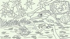 Wonderful Colouring Pages Of River Kingfisher   Free   {BEAUTIFUL COLOURING PAGES}