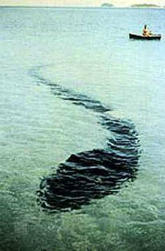 The Hook Island Sea Monster