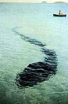 The Hook Island Sea Monster