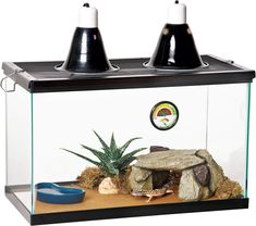 Reptile Kits Are a Useless Waste of Money — Zilla Desert Reptile Kit 10
