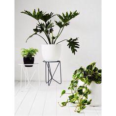 Indoor plant n pots.