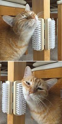 10 new life hacks for cats that make living together more beautiful 10 n . - 10 new life hacks for cats that make living together more beautiful 10 new life hacks for cat - Bb Chat, Cat House Diy, House For Cats, Cat Hacks, Cat Diys, Life Hacks, House Hacks, Life Tips, Cat Playground