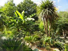 Création de jardins - Pépinière la Maison du Bananier