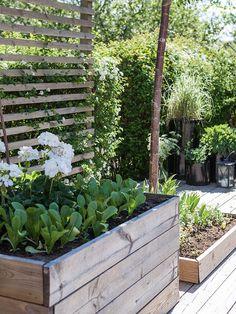 Patio garden landscape architecture, hardscape & gardening с Garden Spaces, Garden Beds, Box Garden, Balcony Garden, Herb Garden, Vegetable Garden, Small Gardens, Outdoor Gardens, Modern Gardens