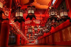The temple of lanterns and a famous location for viewing wisteria. Beautiful World, Beautiful Places, Japan Landscape, Japanese Architecture, Buddhist Temple, Japanese Culture, Kung Fu, Geisha, Japan Travel