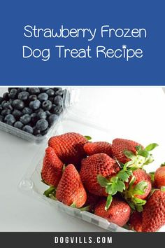 Ready for another delicious frozen dog treat that you can enjoy too? Today we're whipping up a tasty strawberry and blueberry frozen dog treat! Dog Treat Recipes, Dog Food Recipes, Frozen Dog Treats, Best Dog Food, Homemade Dog Treats, Blueberry, Berries, Easy Meals, Strawberry