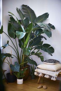 big leafy tropical plants indoors
