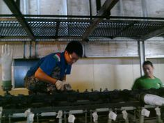 disposable gloves production lines foreign installation