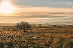 Frow bak fryday 2 da peeek diztrikt ///// #peakdistrict #england #nationalpark #sonya6000 #sonyimages #mistymorning #landscape #tree #gold #Every3secondsadonkeycries /////