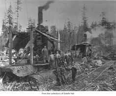 Logging Companies in Washington | Merrill and Ring Logging Company logging crew with donkey engines ...
