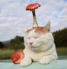 Shironeko with mushroom hat.